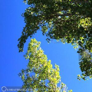 Trees are like Iceburgs